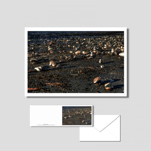 Het wad - schelpen op droogvallend wad