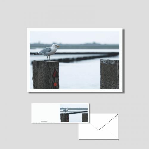 Het wad - meeuw bij de pier van Holwerd
