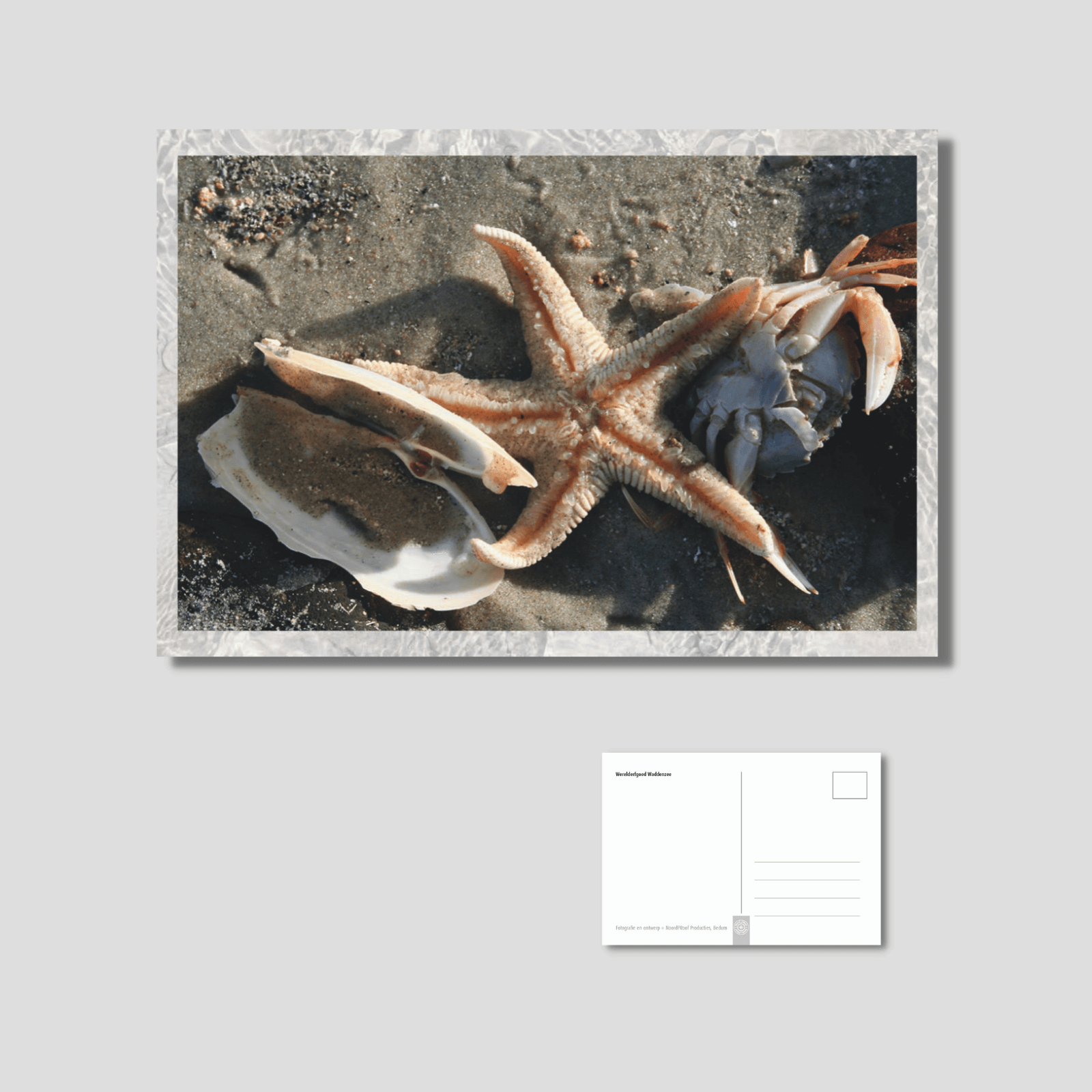 Het wad - seafood
